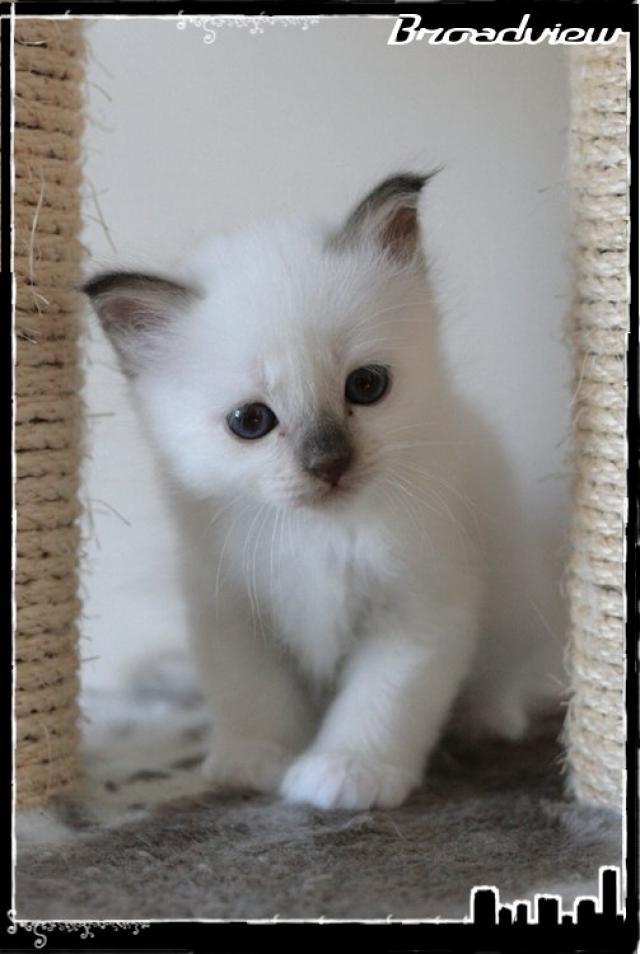 Les bébés de Foxy et Pepper 2012_07_15_joe2-3665d2f