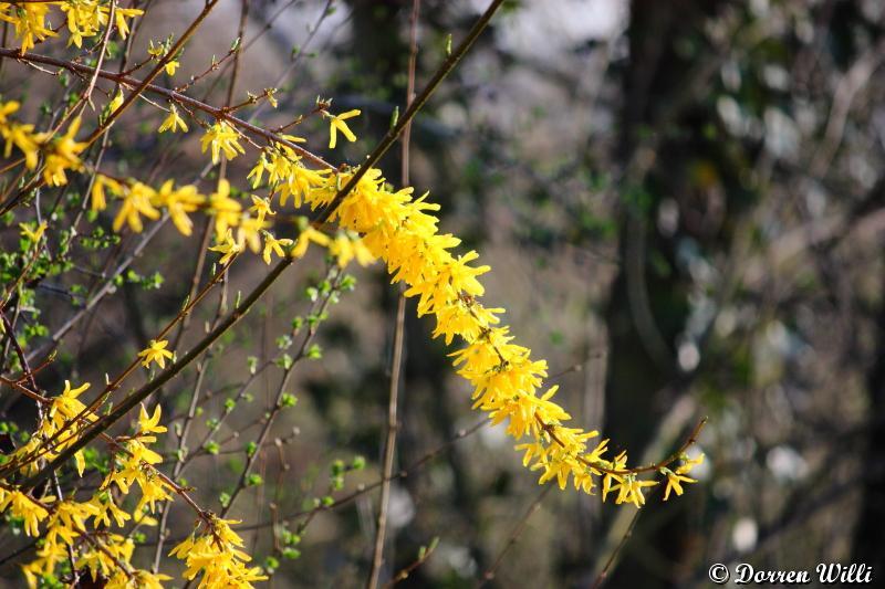 Vive le printemps Dpp_-fleurs---0002-32f5a41