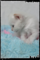 Les bébés de Foxy et Pepper Jack5-3632192