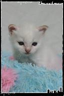 Les bébés de Foxy et Pepper Jack2-3632183