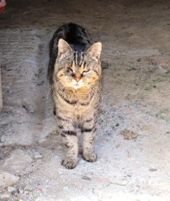 2 chats en danger - Les Essarts (85) Img_0883-332e3c4