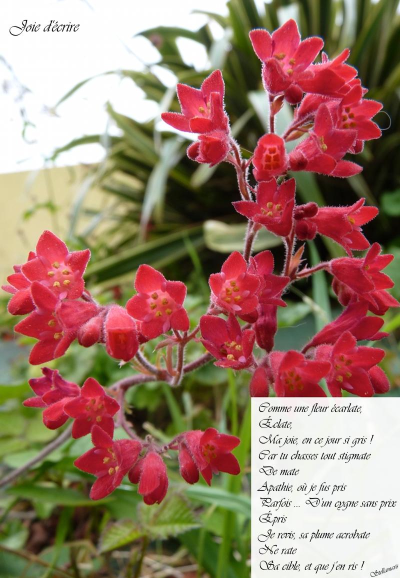 Joie d'écrire / / Comme une fleur écarlate, / Éclate, / Ma joie, en ce jour si gris ! / Car tu chasses tout stigmate / De mate / Apathie, où je fus pris / Parfois ... D'un cygne sans prix / Épris / Je revis, sa plume acrobate / Ne rate / Sa cible, et que j'en ris ! / / Stellamaris